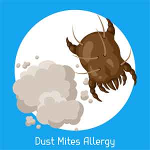 Dust mites can come from mattresses