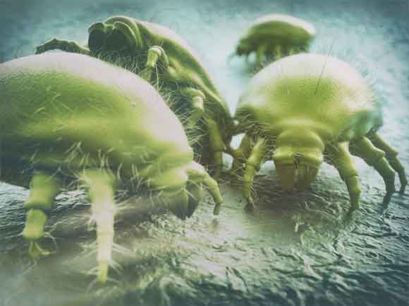 House dust is the main reason for dust-mite growth