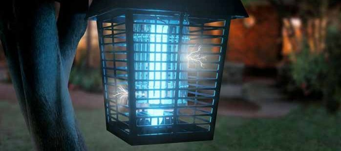 What Insects does Insect Zapper Kill