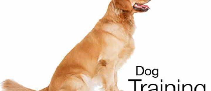 What are Good Dog Training Treats?