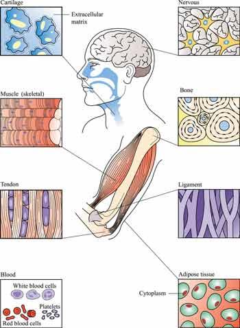 Tissue Pain