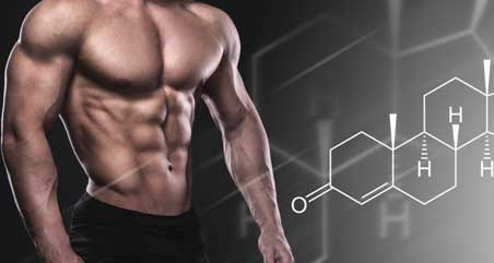 The Function of Testosterone