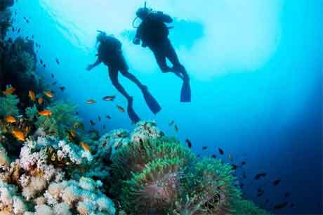 Considerations Before Booking Cruises That Offer Scuba Diving